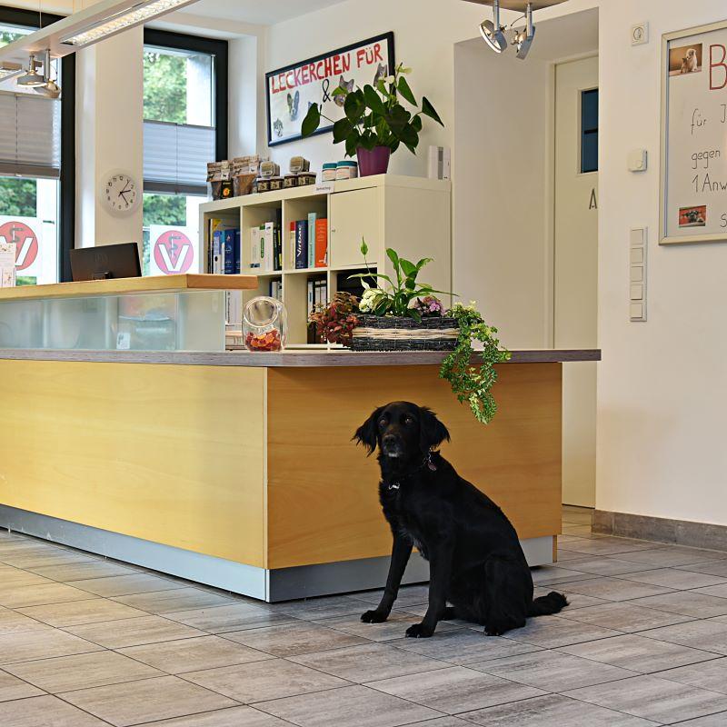 Tierarztpraxis Muller: Kontakt